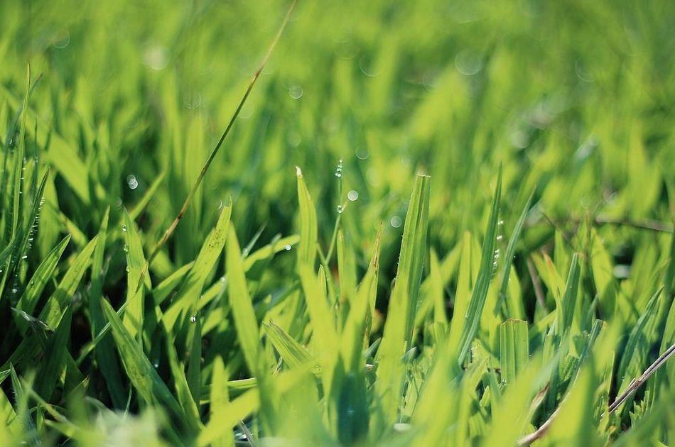 Riegos automáticos: Catálogo de Salvia Jardinería