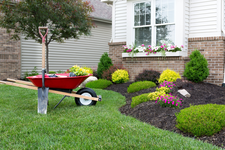 Mantenimiento de jardines: Limpiezas de Limpiezas Don Alexis