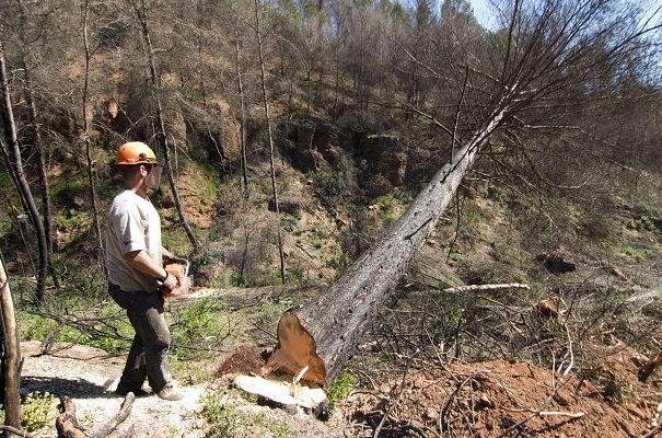 Empresa dedicada al la tala de árboles y venta de leña y carbón
