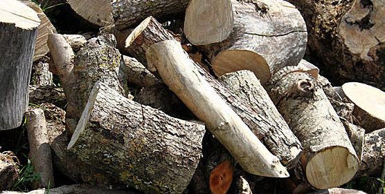 Leña de diferentes tipos de madera