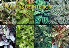 Proyectos de paisajismo en Ibiza