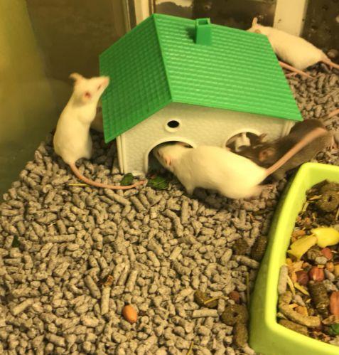 Para los amantes de los roedores...