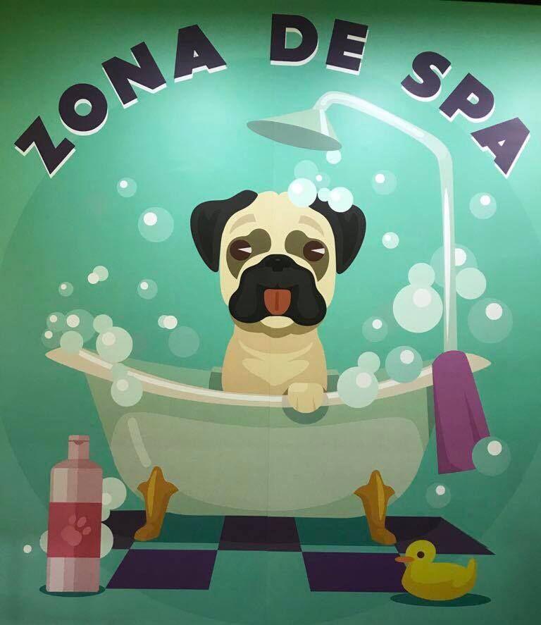 Peluquería Canina y Felina: Servicios de Mascotas Dreams