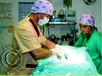 Foto 7 de Veterinarios en Pozuelo de Alarcón | Anubis Clínica Veterinaria