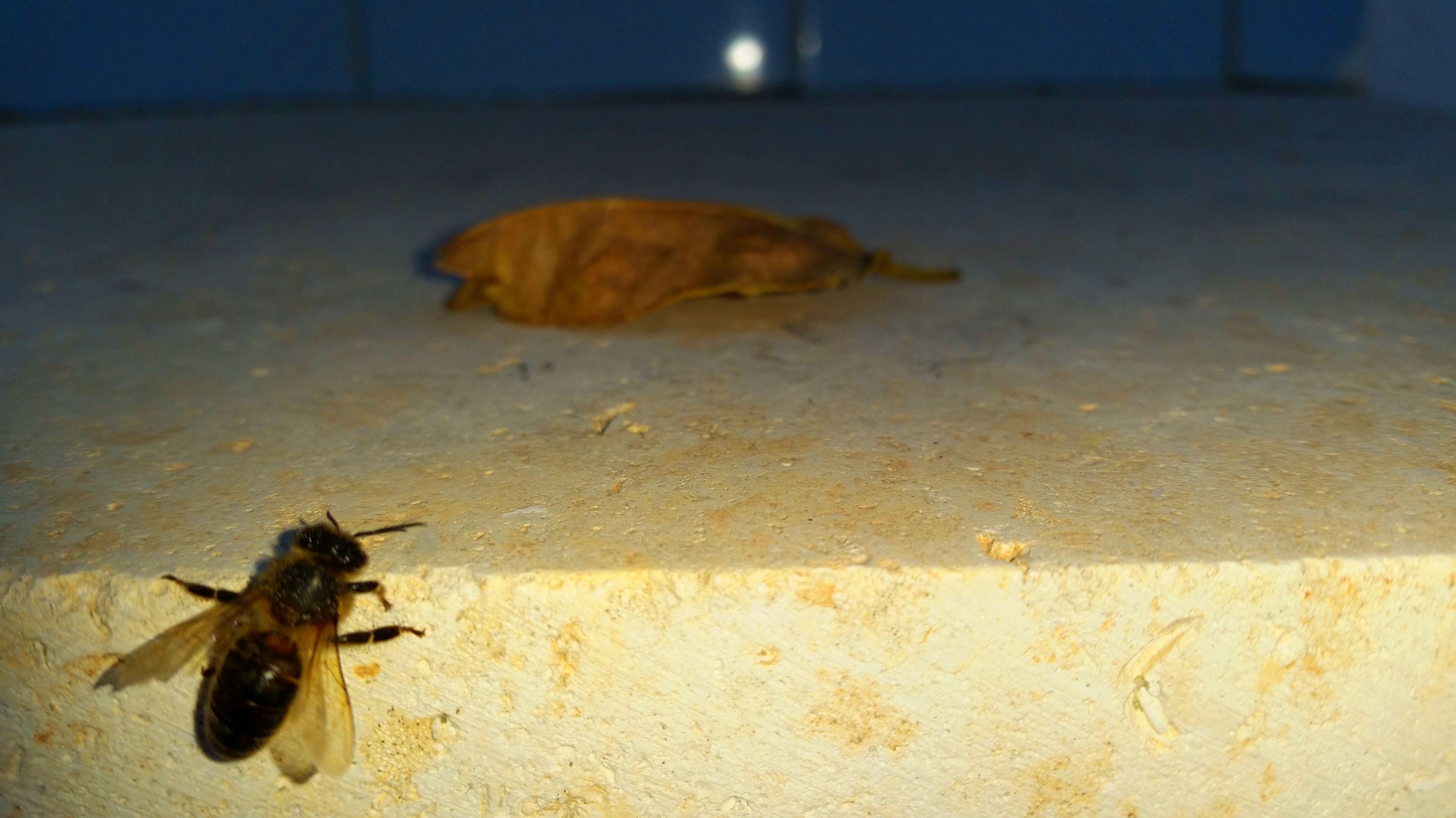 Foto 35 de Desinfección, desinsectación y desratización en Alaquàs | Ecoserra