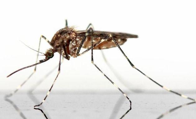 Mosquitos : Servicios  de Ecoserra