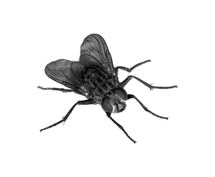 Control de insectos voladores: mosquitos, moscas, polillas...