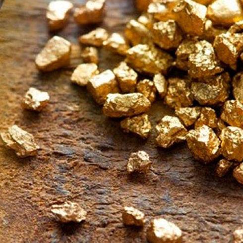 Termitas buscadoras de oro