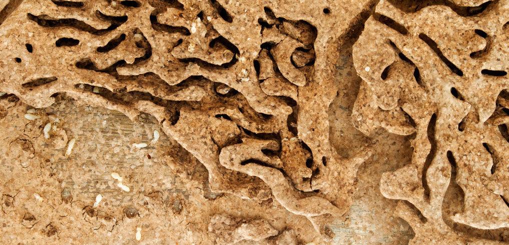 Plan de actuación para el control de termitas
