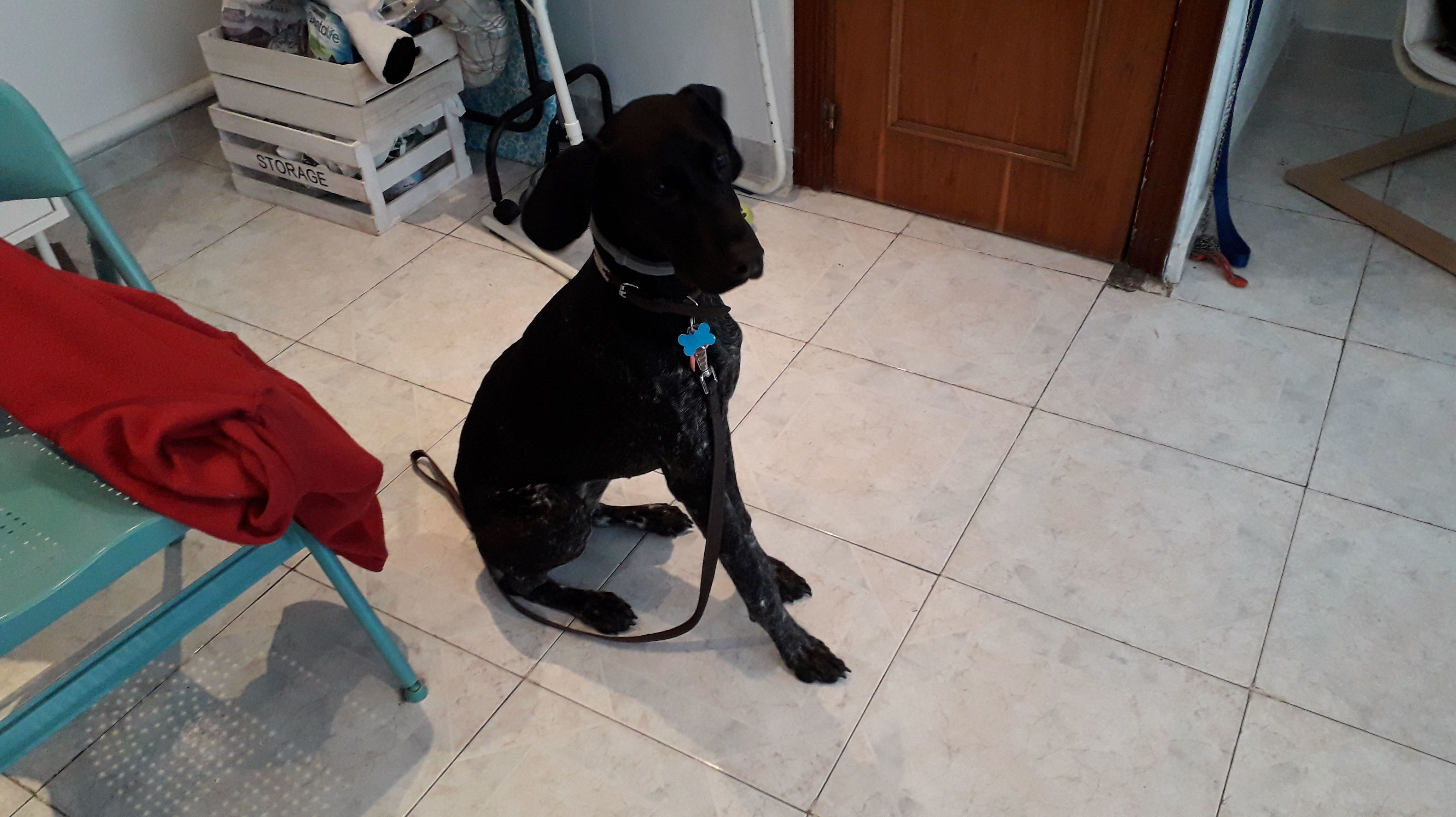 Foto 10 de Peluquería canina en  | Peludetes de Carmen