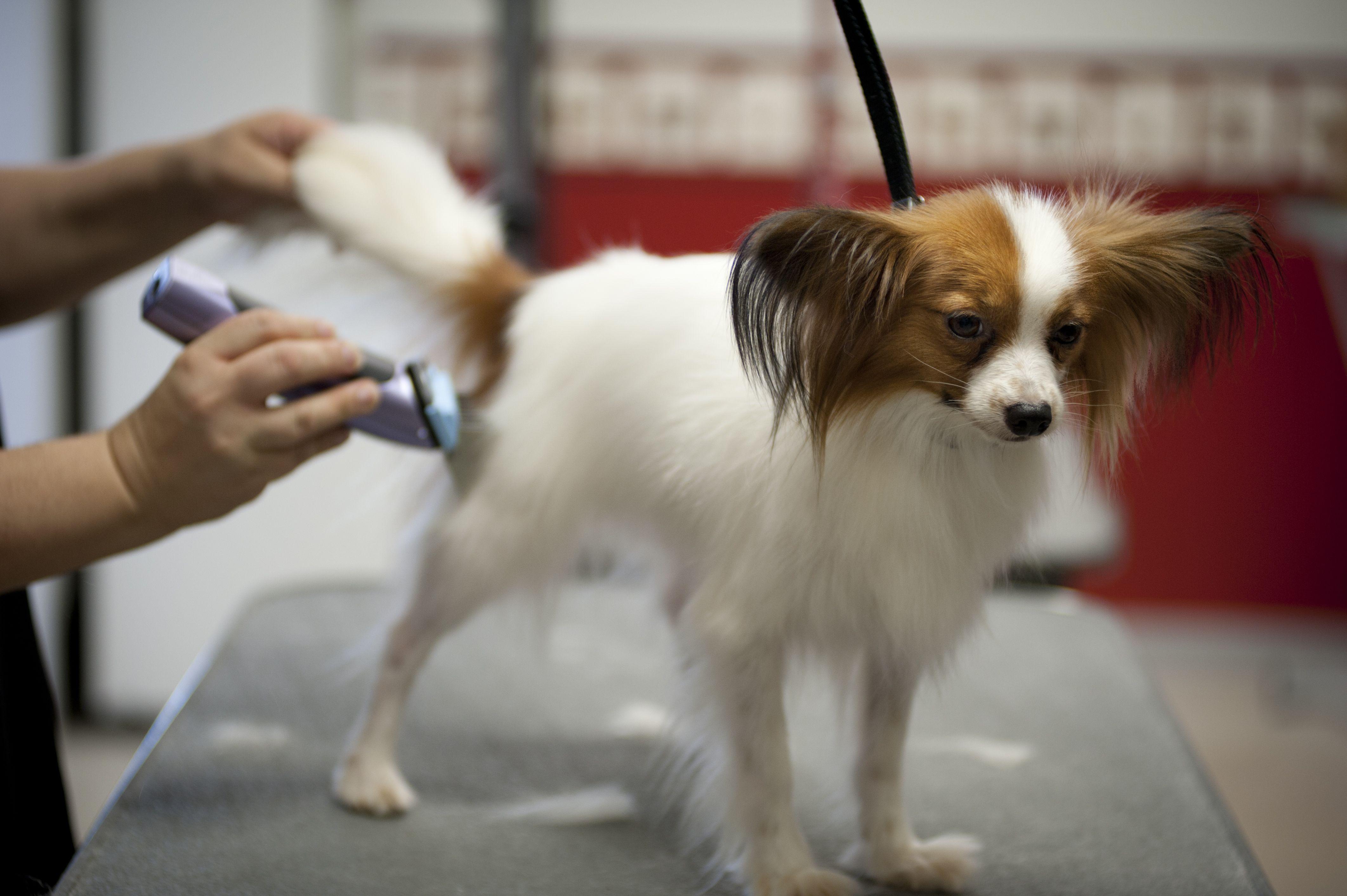 Peluquería para perros barata en Valdezarza