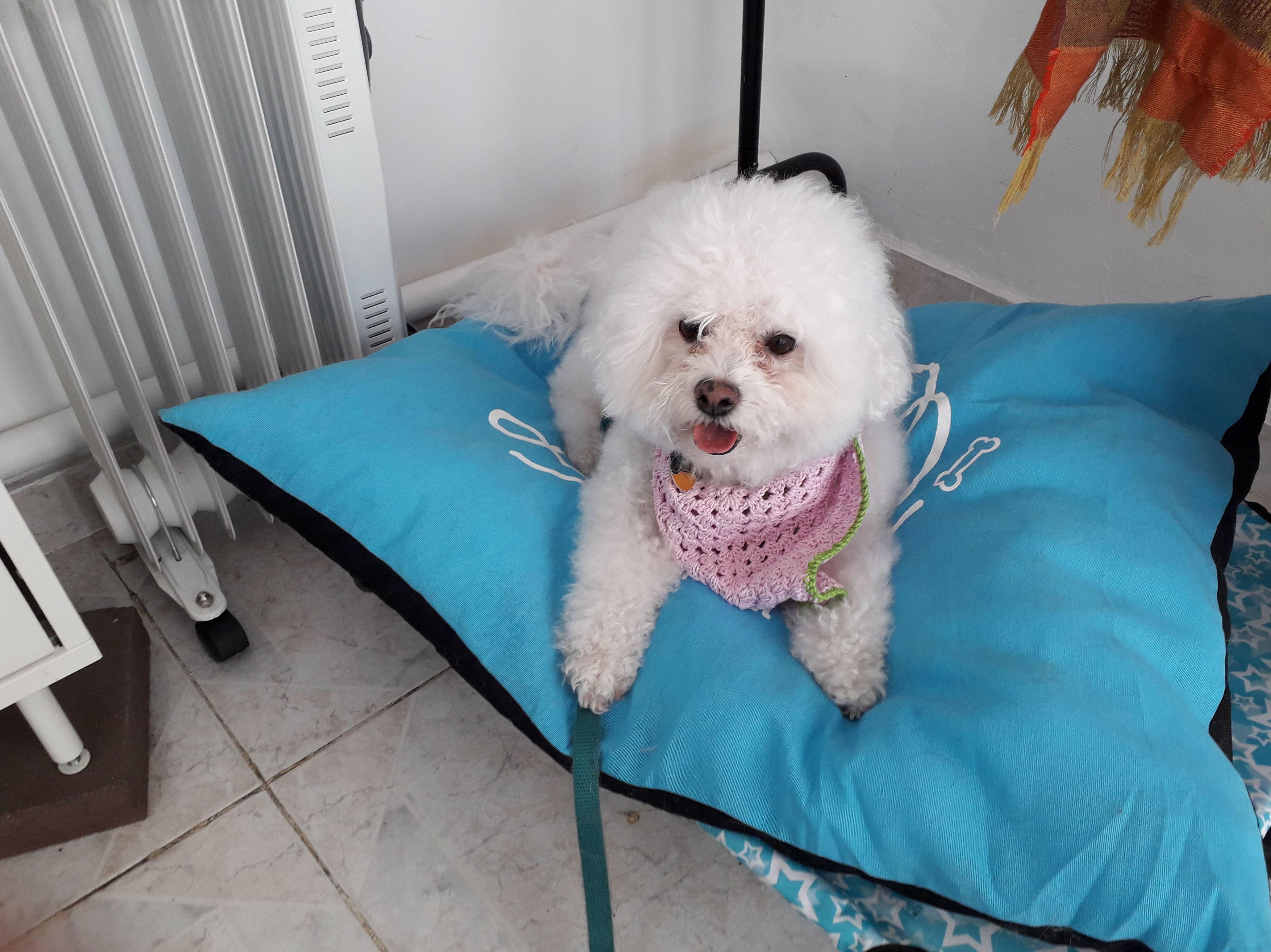 Foto 7 de Peluquería canina en  | Peludetes de Carmen