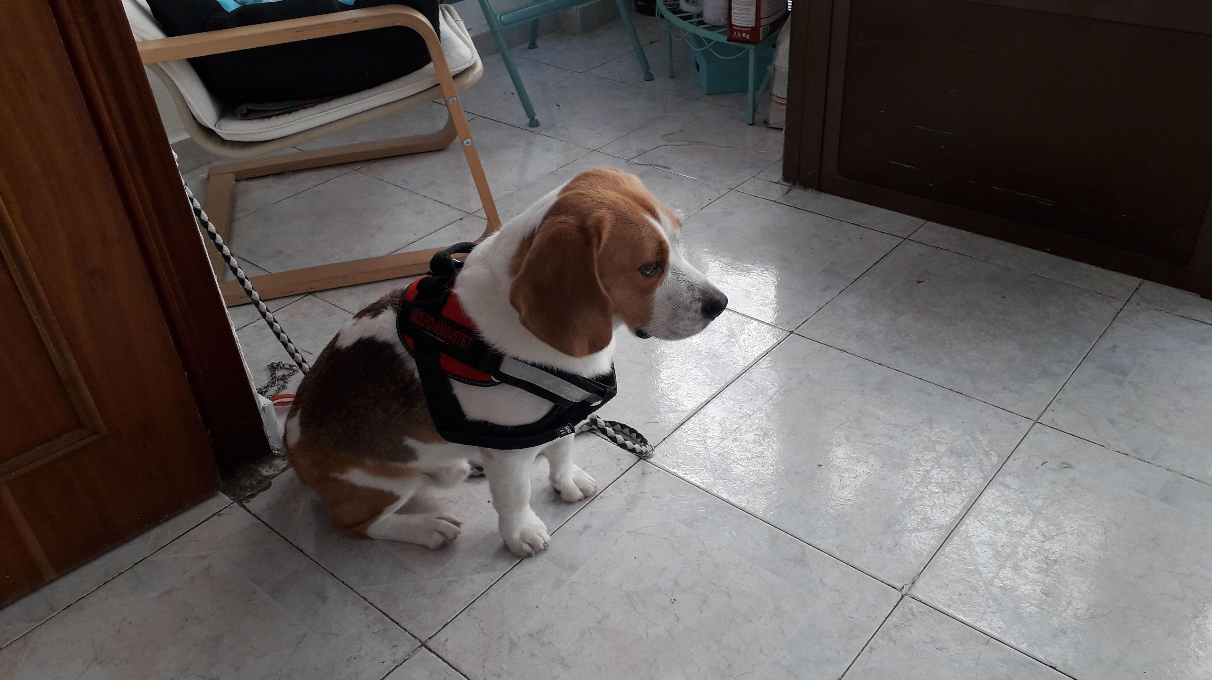 Foto 9 de Peluquería canina en  | Peludetes de Carmen