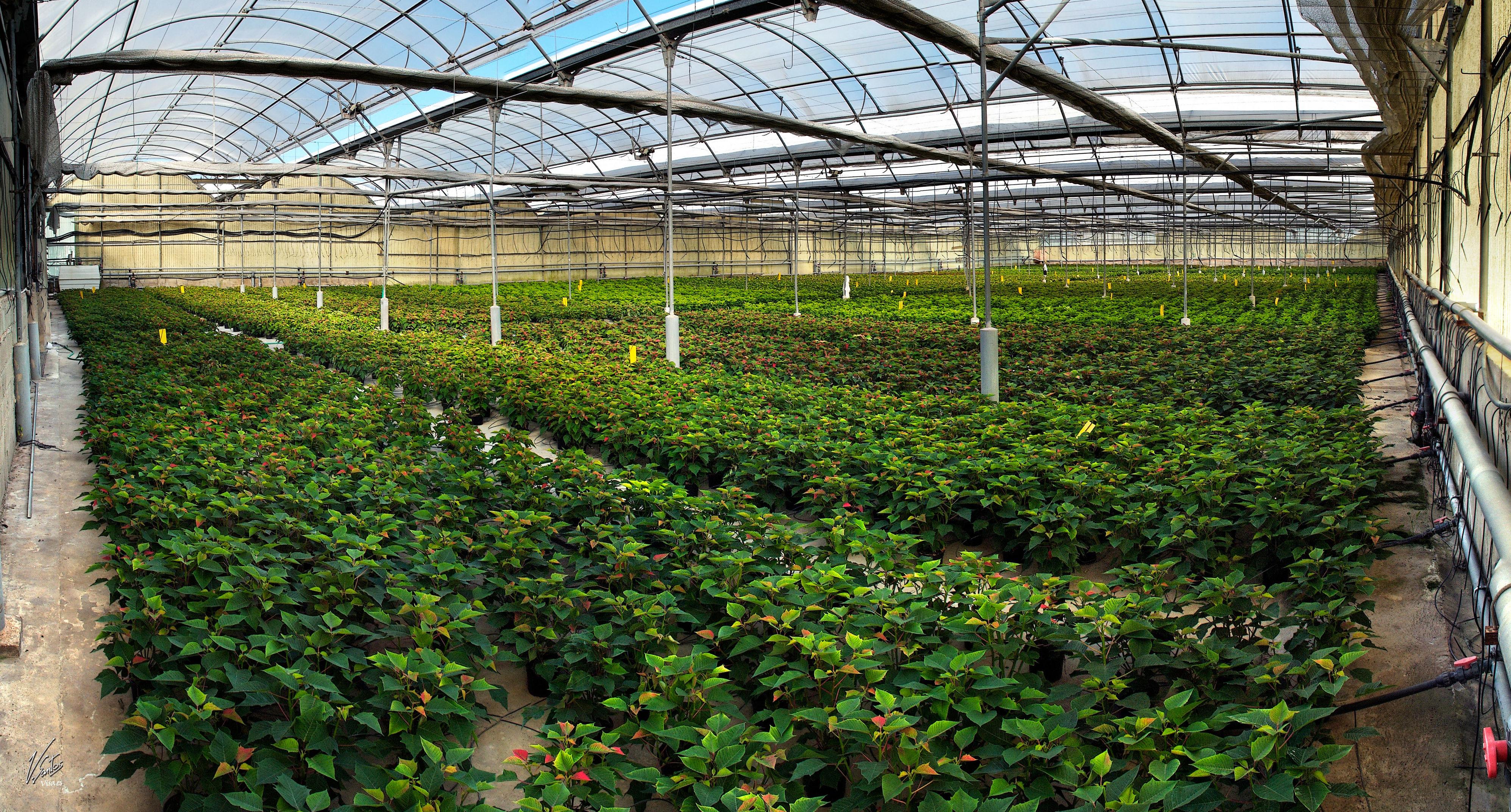 Foto 5 de Vivero de plantas ornamentales en  | Viveros Algeplant