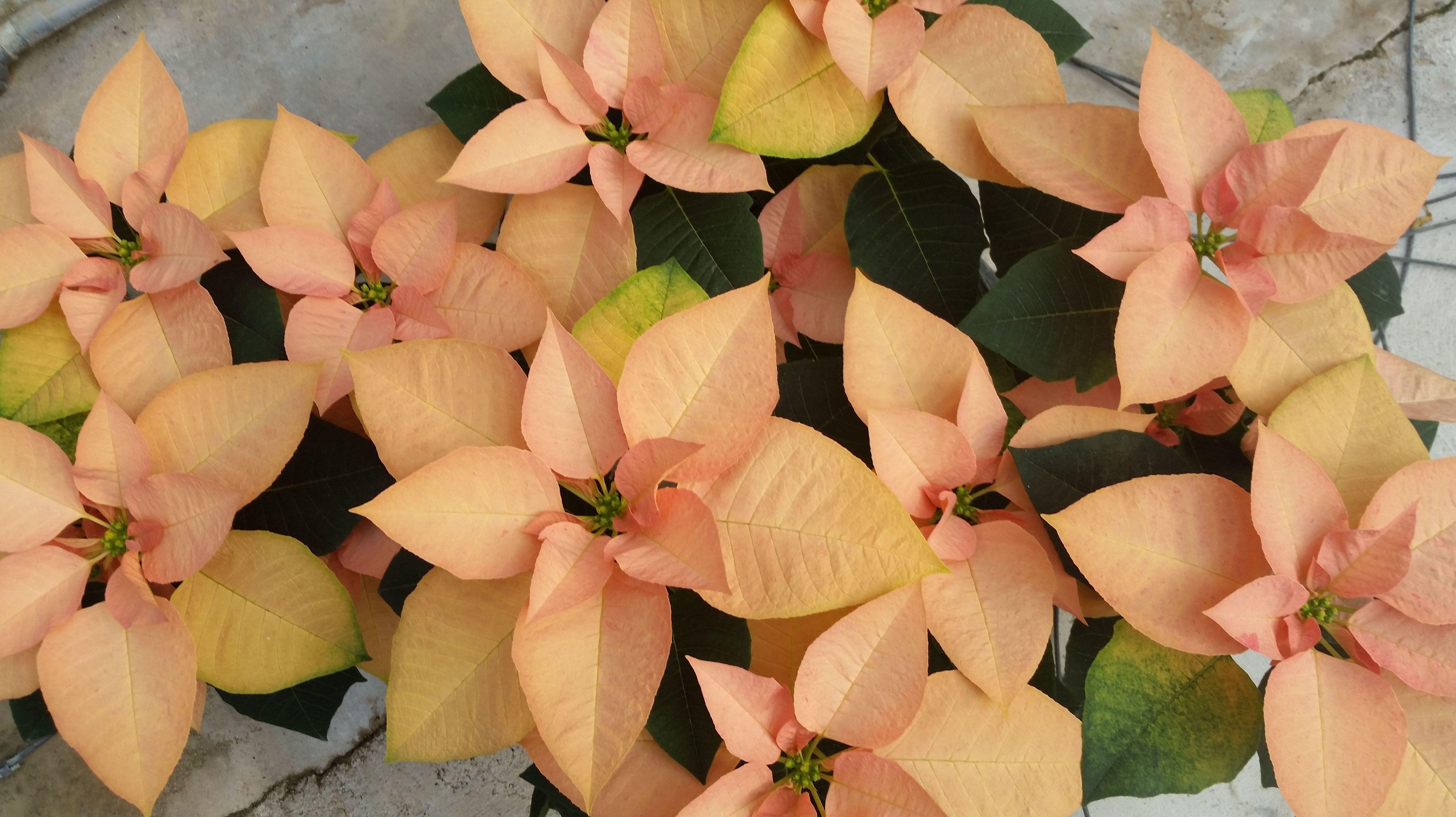 Foto 6 de Vivero de plantas ornamentales en  | Viveros Algeplant