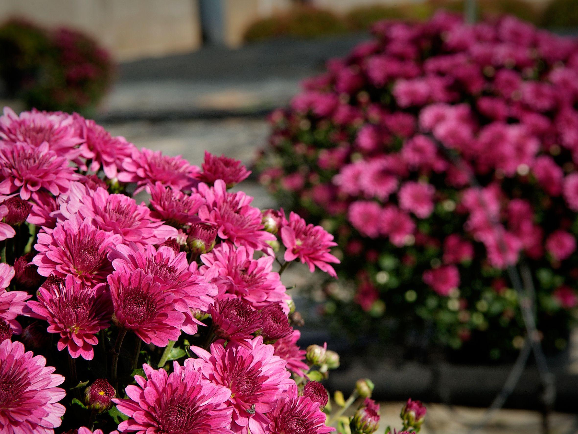 Foto 2 de Vivero de plantas ornamentales en  | Viveros Algeplant
