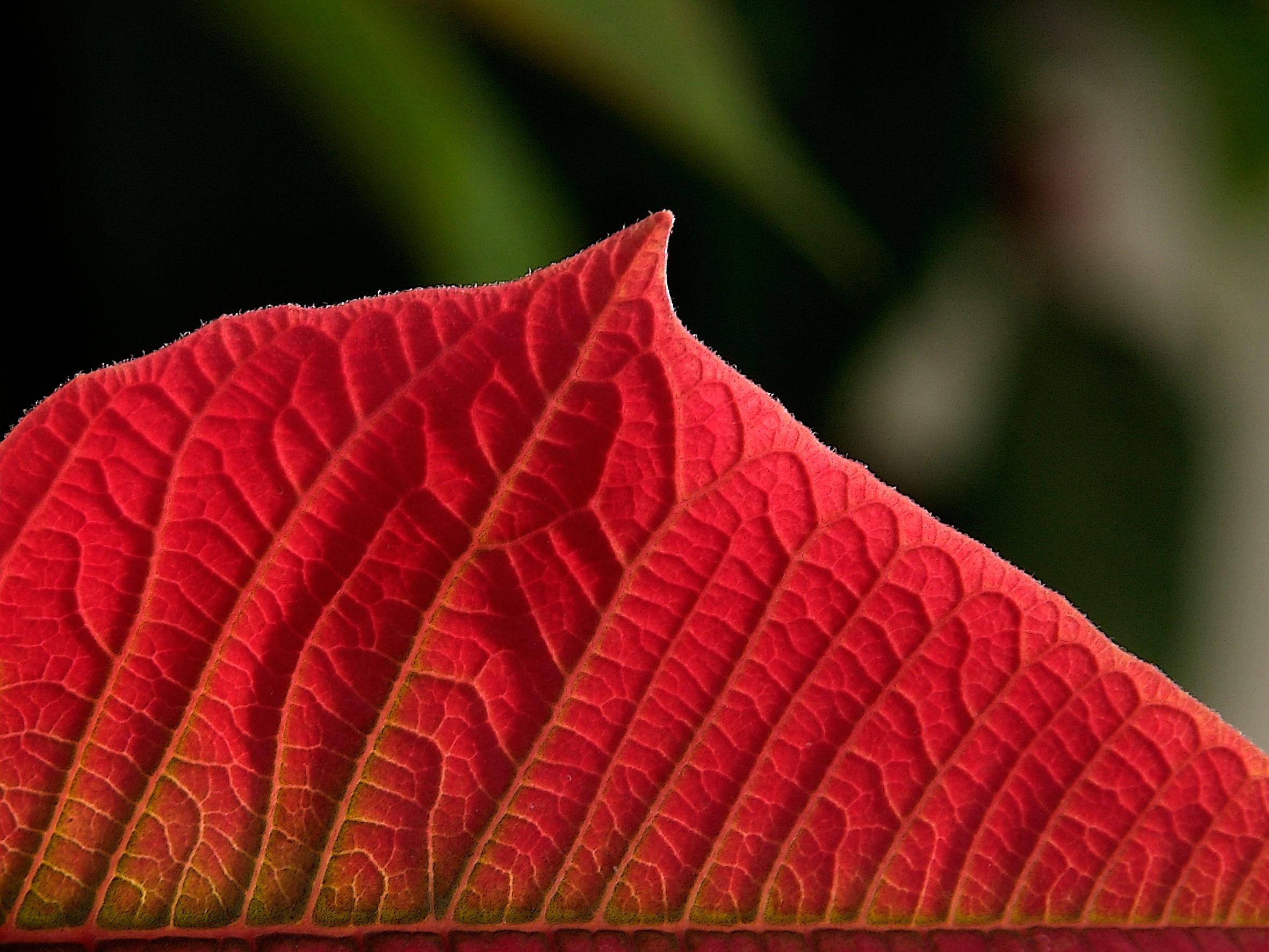 Foto 4 de Vivero de plantas ornamentales en  | Viveros Algeplant