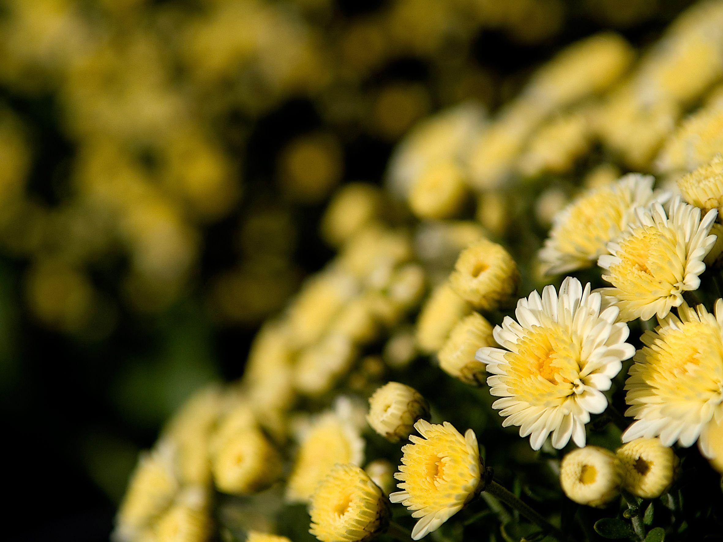 Foto 14 de Vivero de plantas ornamentales en  | Viveros Algeplant