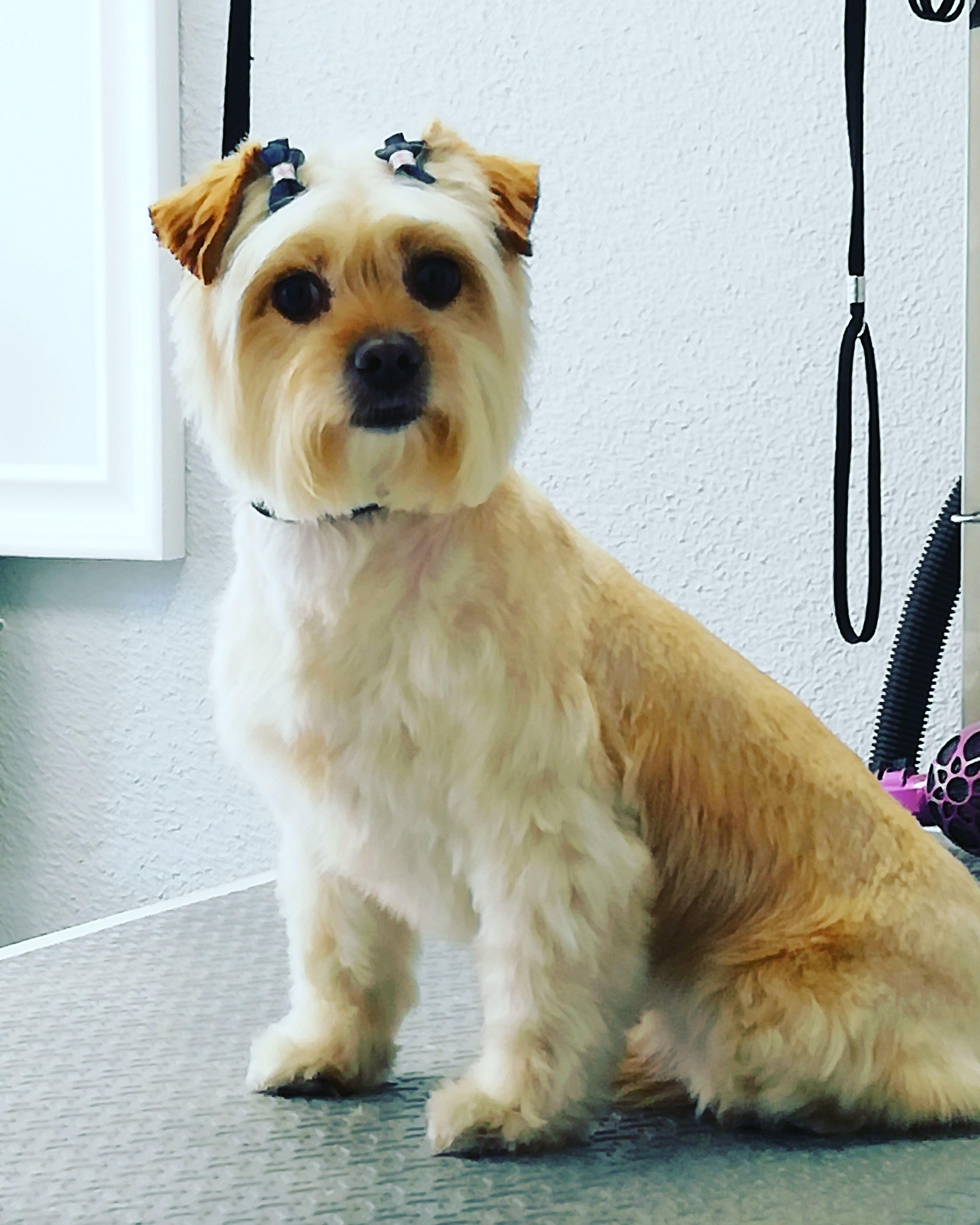 Foto 3 de Peluquería canina en  | Art Perros