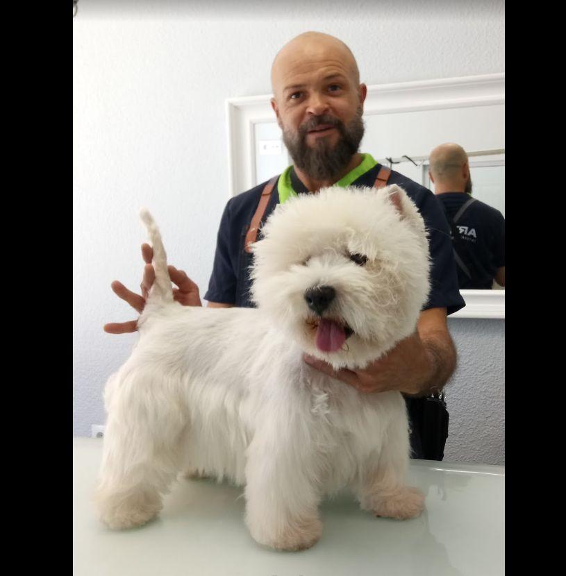 Foto 22 de Peluquería canina en  | Art Perros Peluquería Canina