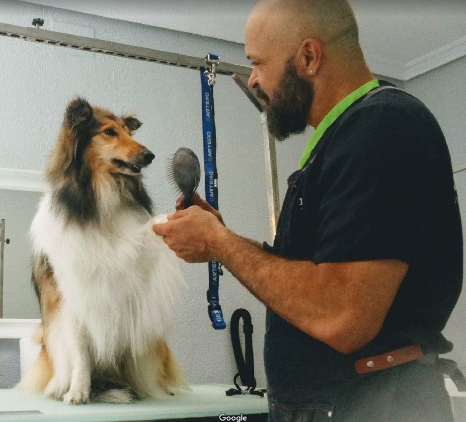 Foto 16 de Peluquería canina en  | Art Perros