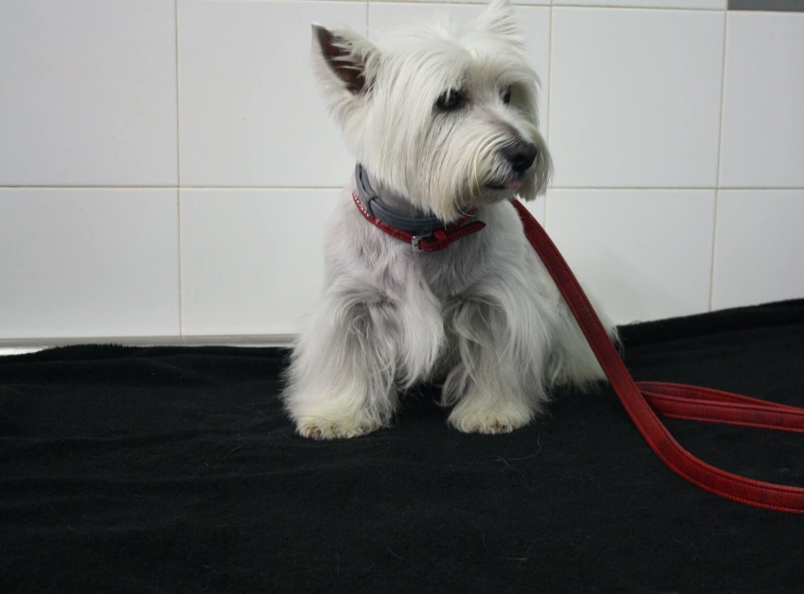 Peluquería canina en Alella