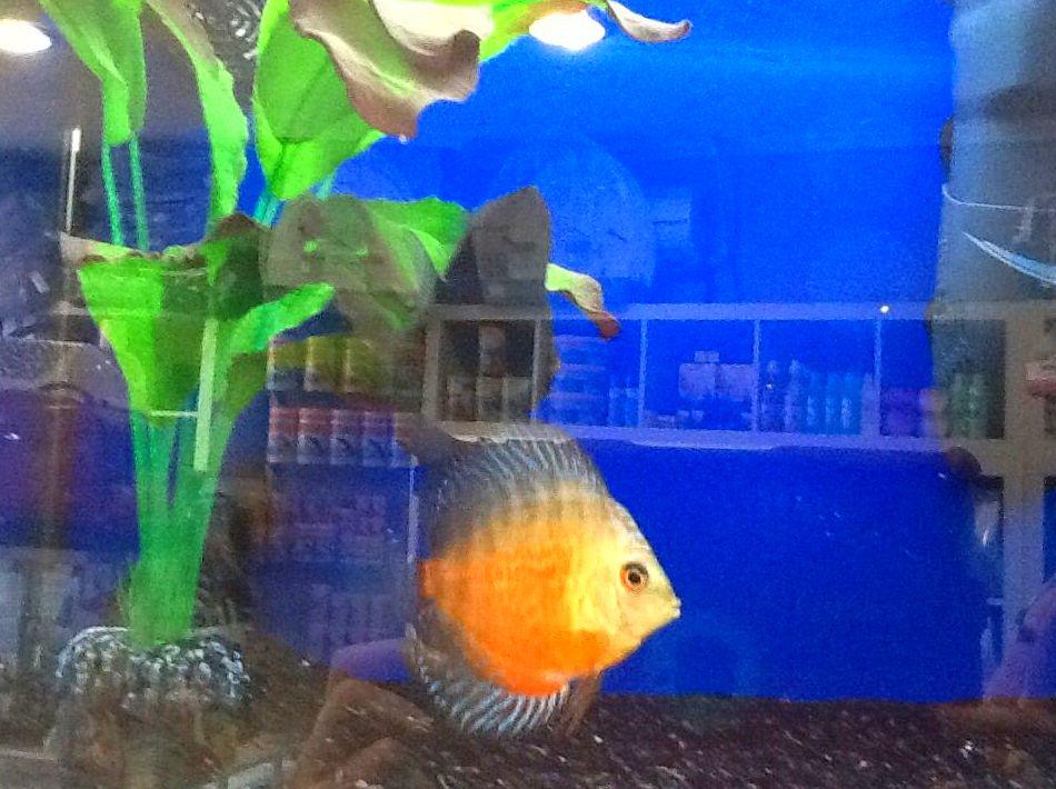 Alimento peces ornamentales agua fr a y estanque for Peces ornamentales agua fria