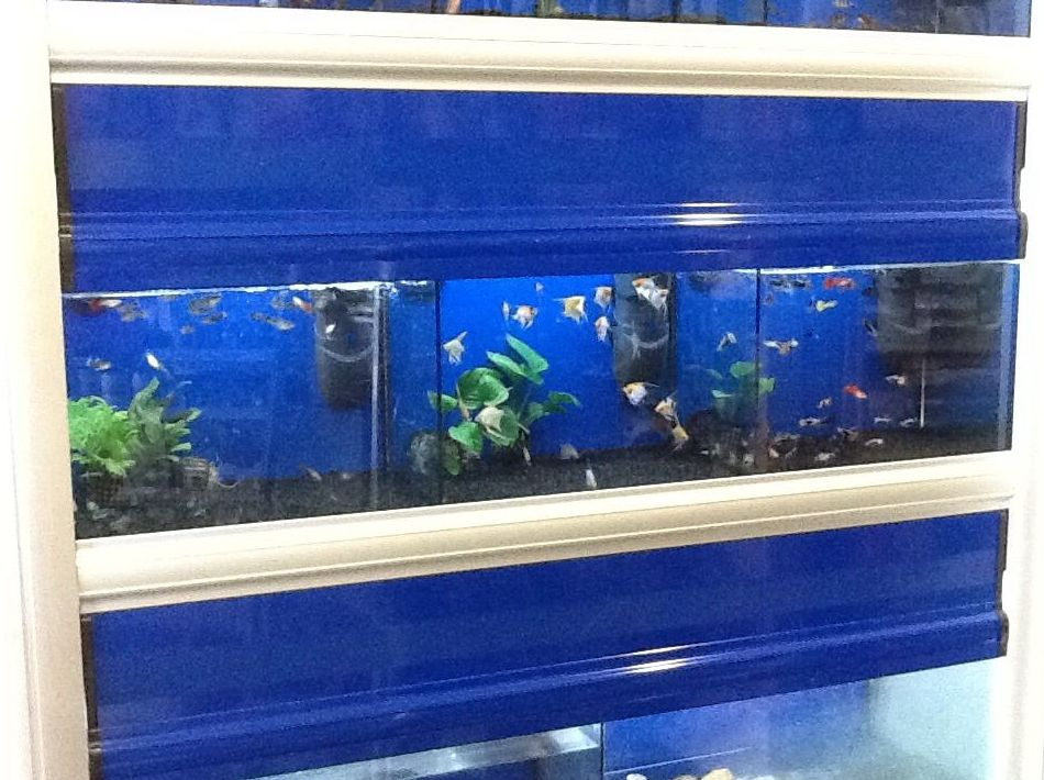 Peces tropicales en Oviedo: Productos y servicios de El Gato Persa
