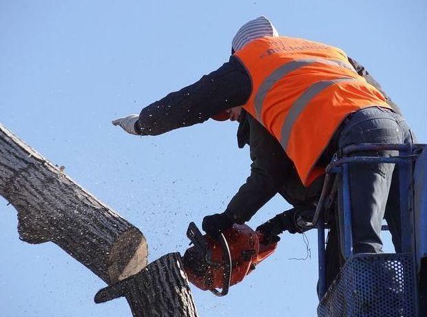 tala de árboles Torrelabella