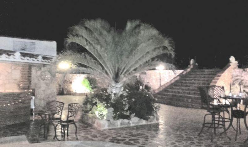 Mantenimiento y diseño de jardines en Málaga
