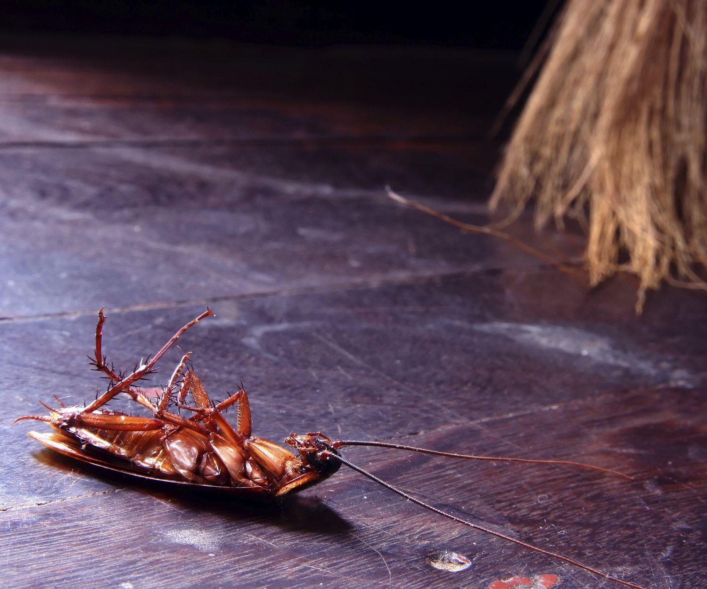 Eliminación de cucarachas en Sevilla
