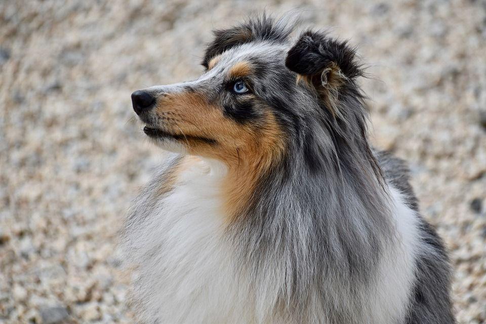 Higiene para tu perro Santa Cruz de Tenerife