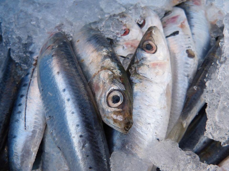 Pescado azul: Productos de La Barquita de San Vicente