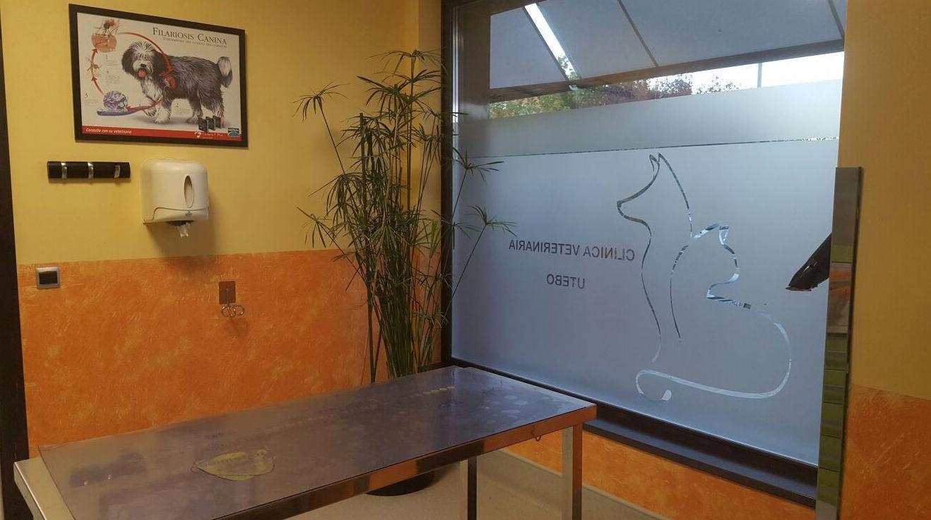 Foto 3 de Veterinarios en Utebo | Clínica Veterinaria Utebo