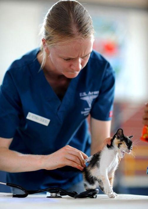 Análisis clínicos : Servicios de Centro Veterinario Abrantes