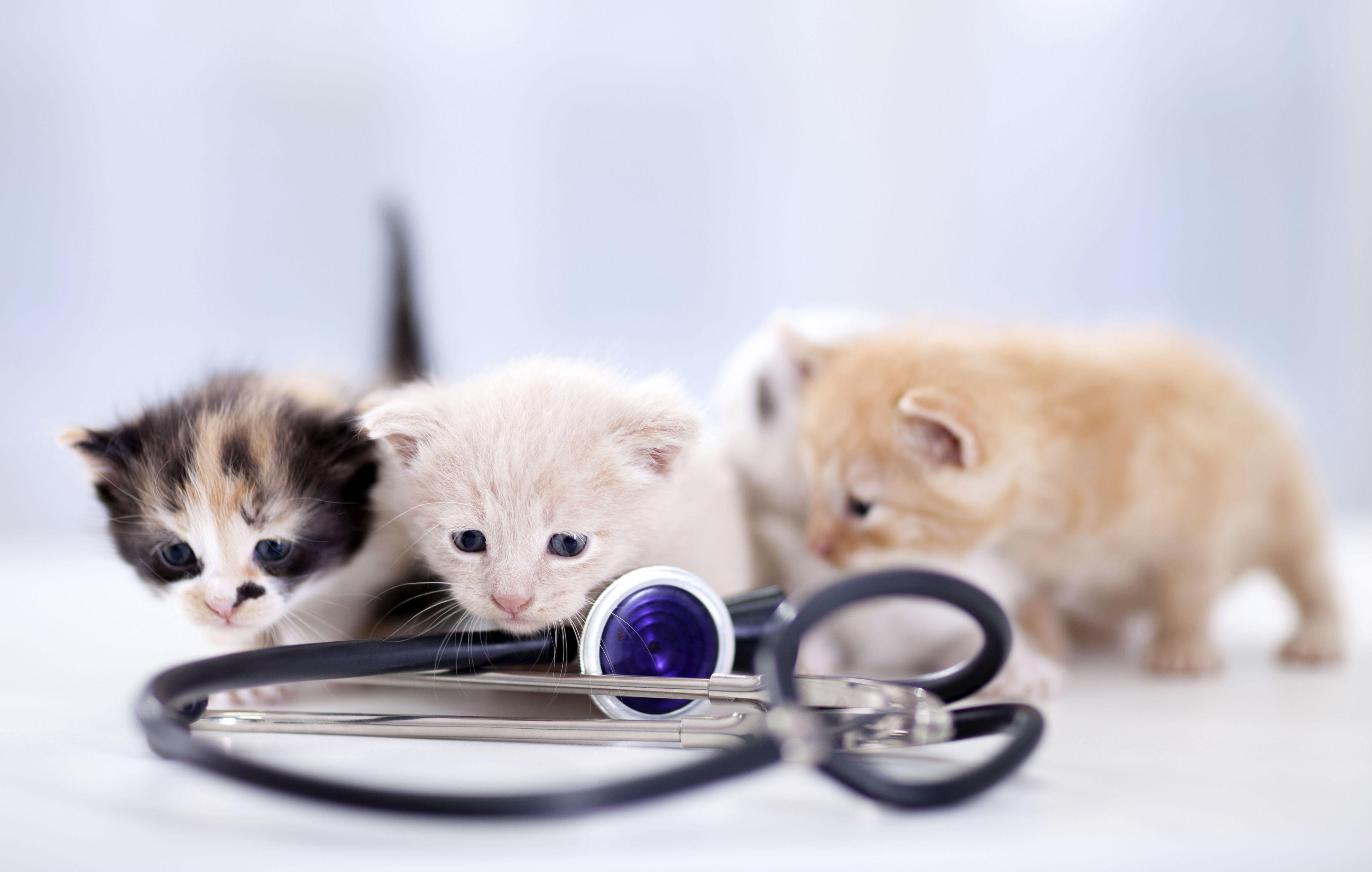 Vacunas : Servicios de Centro Veterinario Abrantes