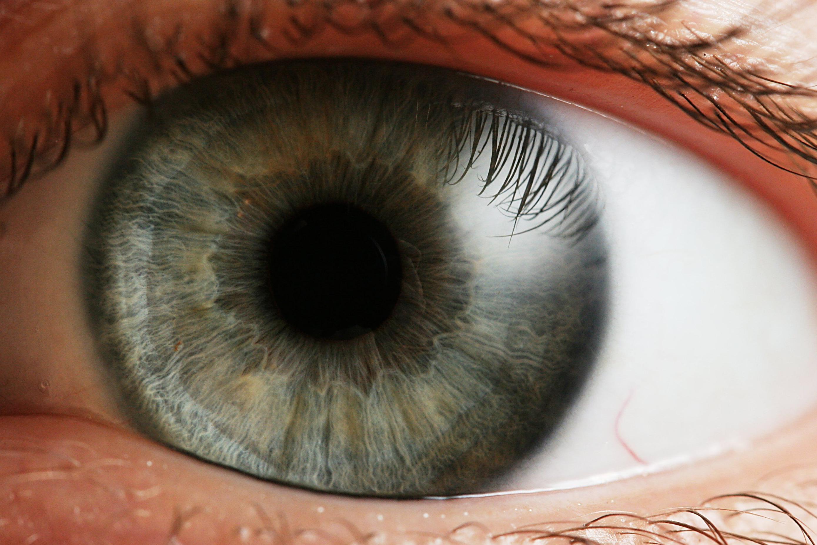 Cura dels ulls: Servicis de Clínica Graullera