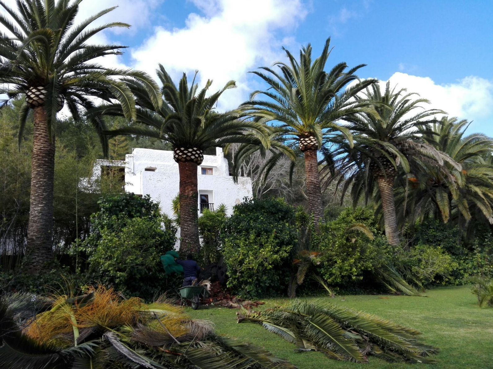 Tamar Gardens. Especialistas en podas de palmeras