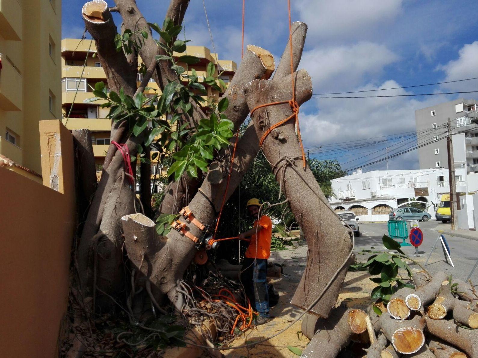 Sustentaciones de árbolado