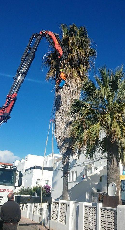 Desmontamos el árbol desde la copa hasta la base del tronco, utilizando frenos, cuerdas, poleas