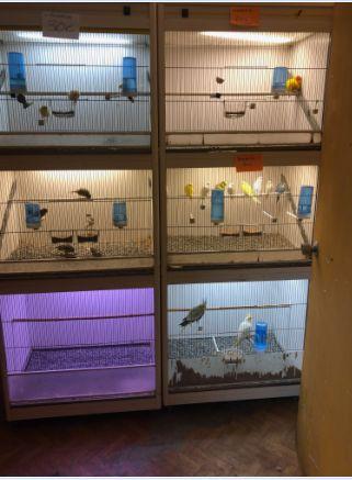 Tienda de animales en Zaragoza