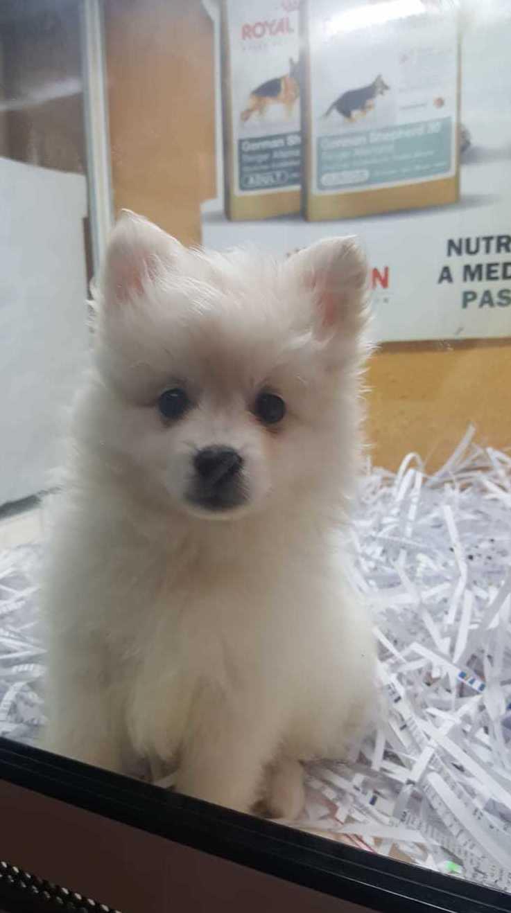 Foto 1 de Tiendas de animales en  | Shira Mascotas
