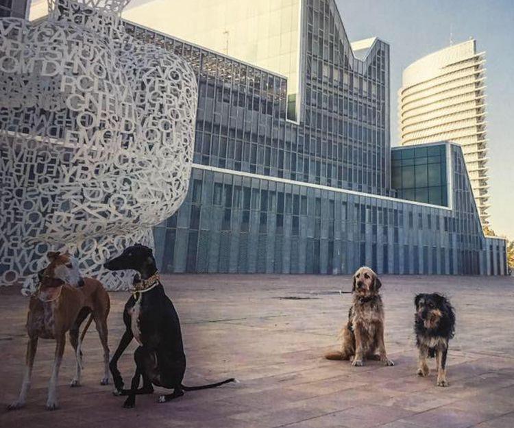 Adiestramiento canino a domicilio en Zaragoza