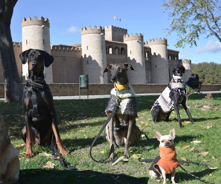 Adiestramiento canino en Zaragoza