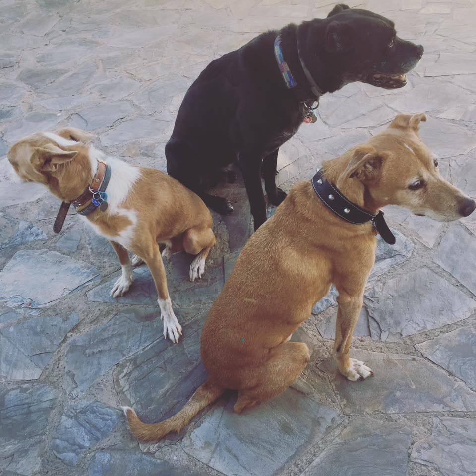 Asesoramiento: Servicios de Cinopolis Adiestramiento y Educación Canina