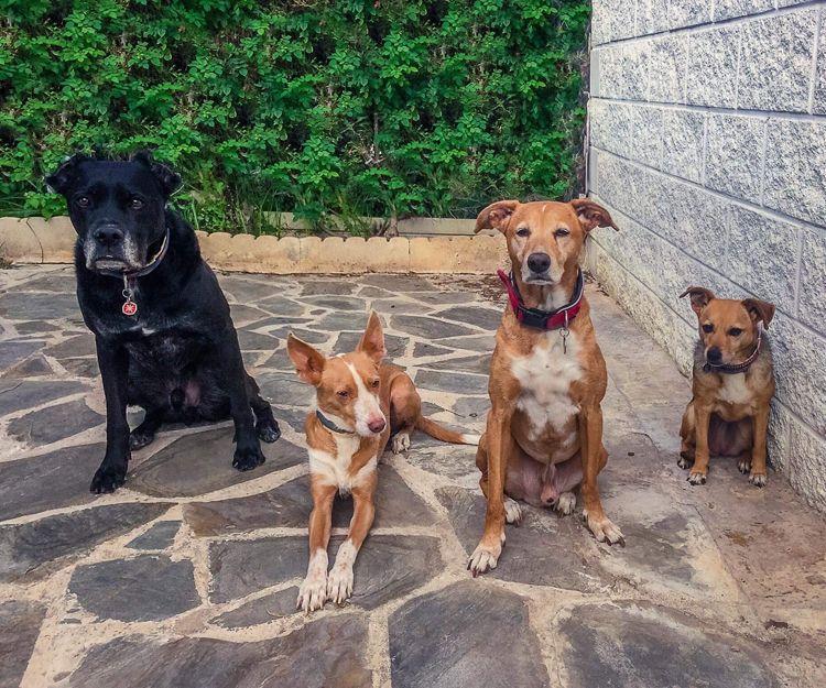 Tratamiento de miedos caninos en Zaragoza