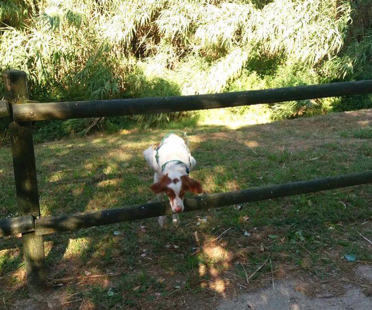 Adiestramiento y cría de animales en Zaragoza