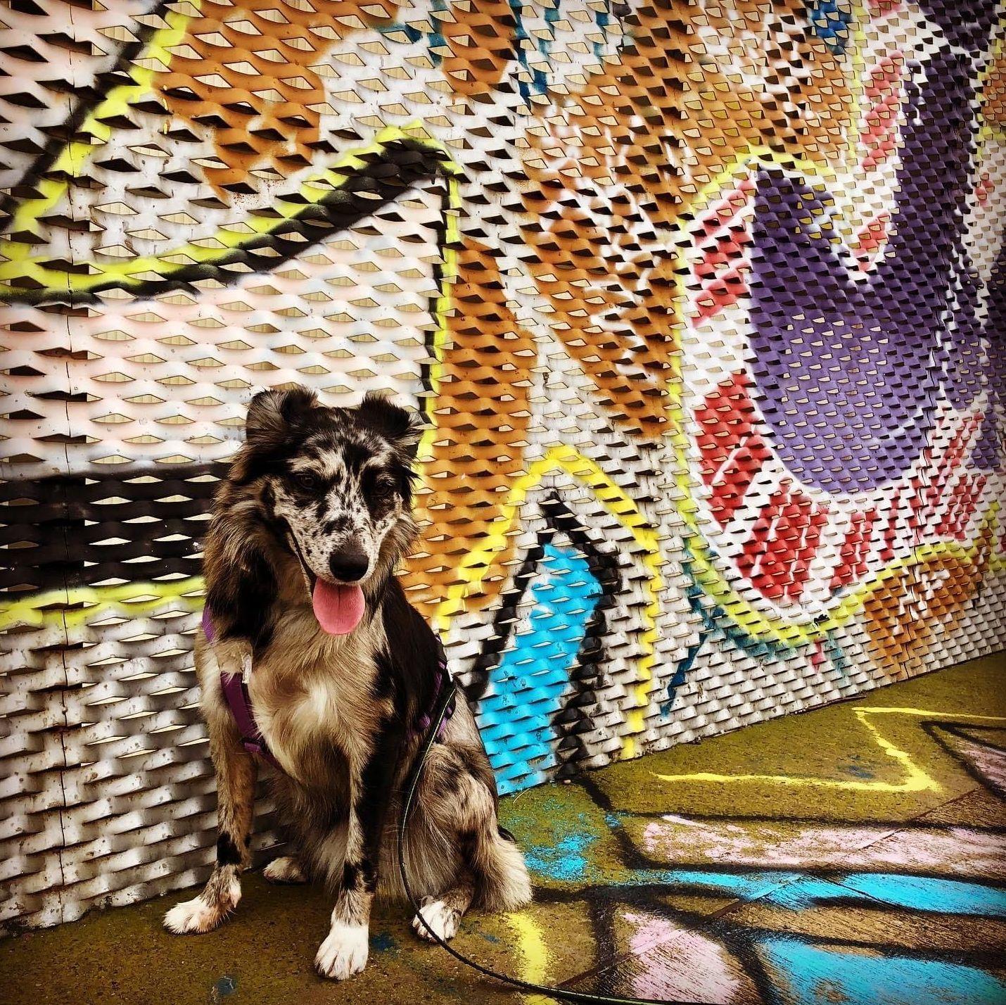 Foto 5 de Educación canina en  | CINOPOLIS