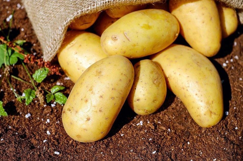 Patatas de siembra