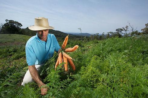 ¿Quieres ser tu proveedor de verduras y hortalizas?